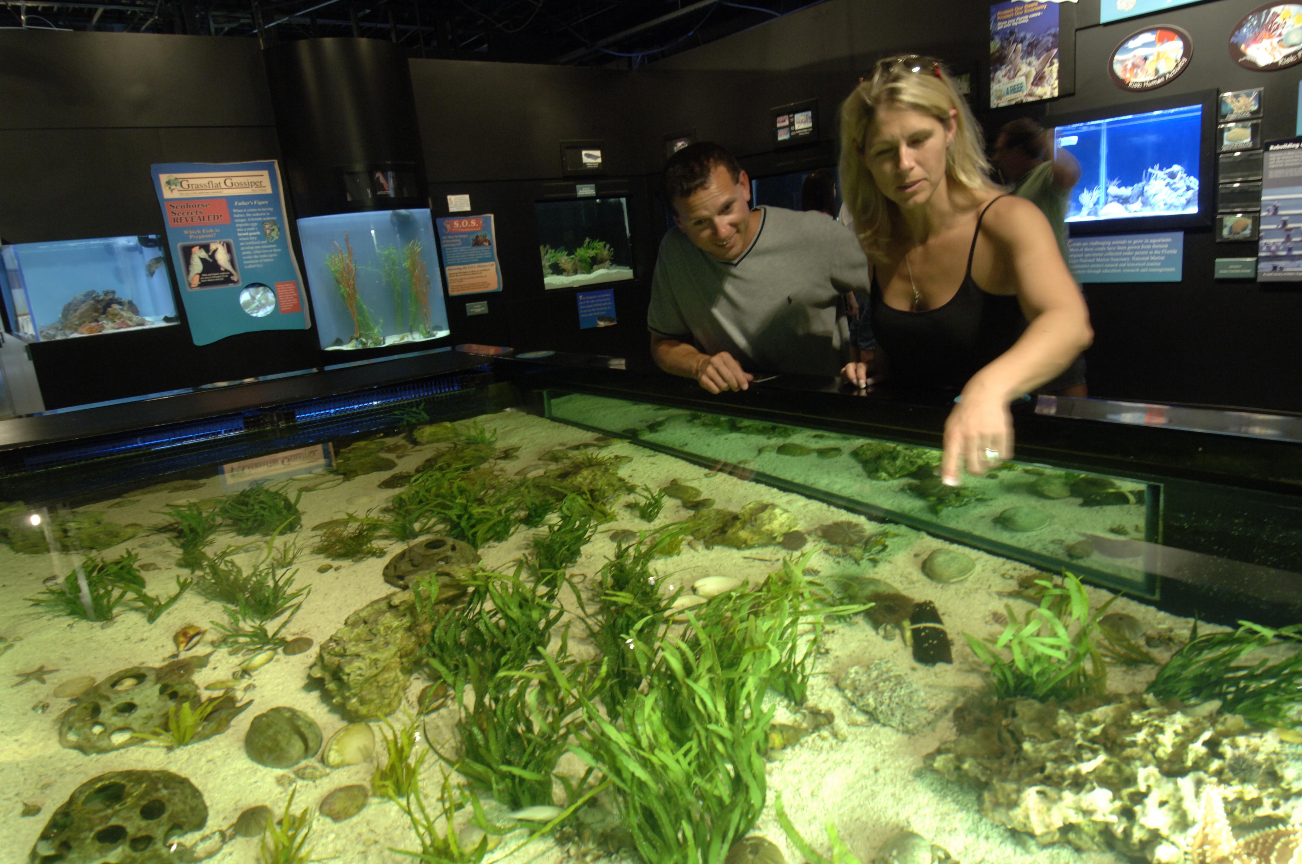 Mote Marine Aquarium in Sarasota, Florida