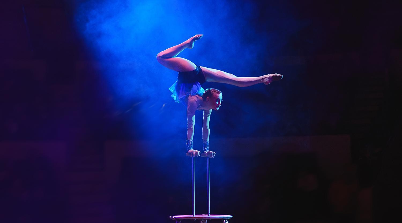 Circus Sarasota in Sarasota, FL with RVA Vacation Rentals