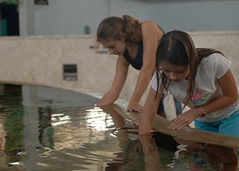 Mote Marine Aquarium in Sarasota, Florida with RVA Vacation Rentals