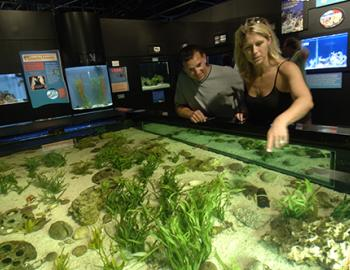 Mote Marine Aquarium in Sarasota, Florida